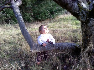 Xander looking up tree